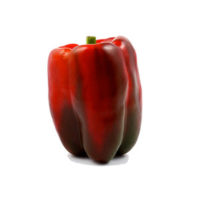 Red Bell Pepper Bio