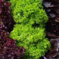 Tris insalata nikel free